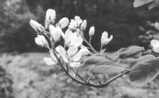 #flowers #texture #springinfinland #hikelife #forest